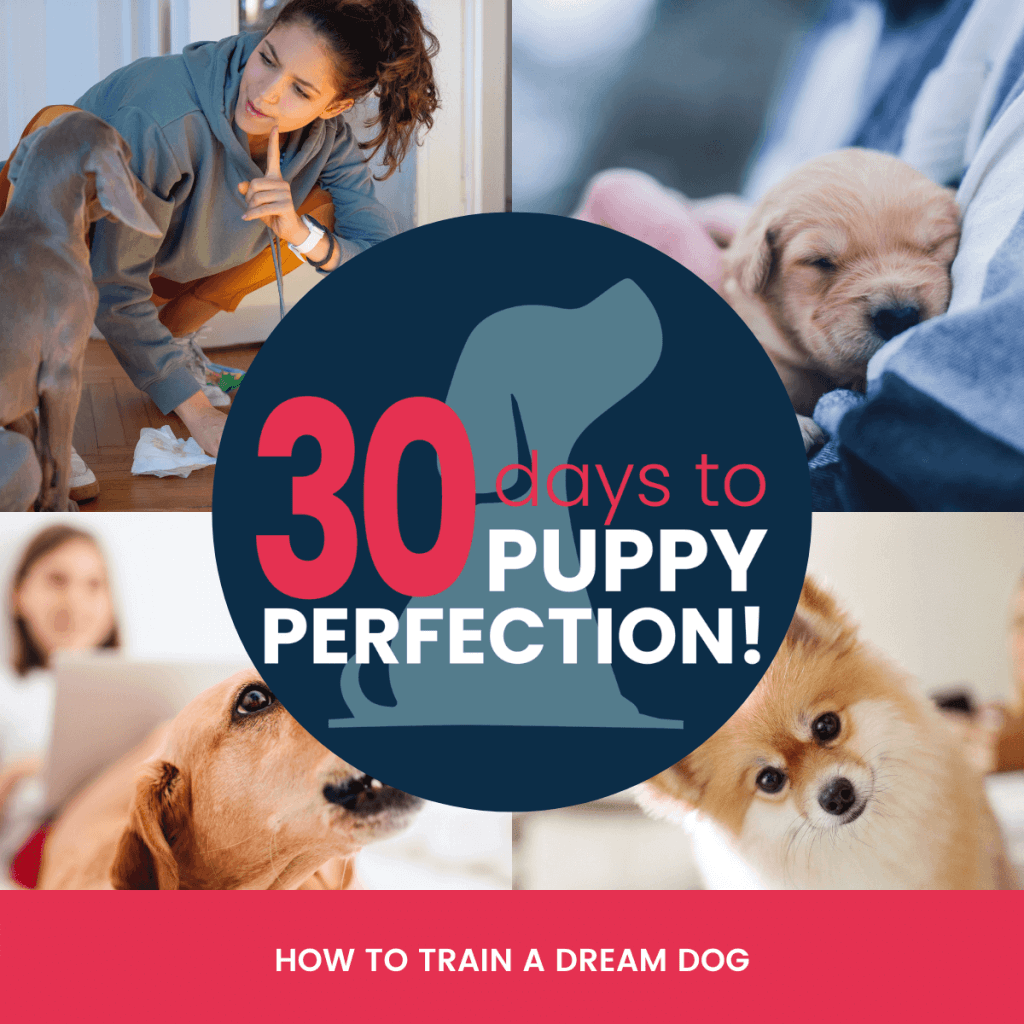 30 days to puppy perfection course