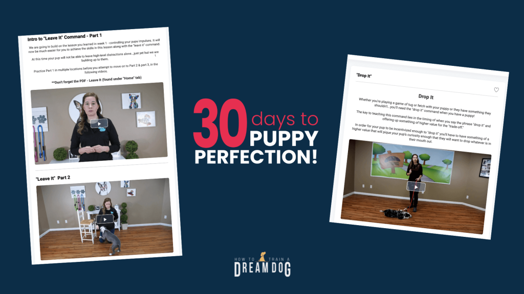 30 Days to Puppy Perfection Online Training Program