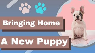 puppy tips for bringing home a new puppy