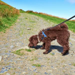 dog on loose leash decompression walk