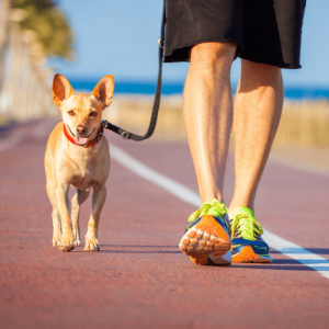 walking dog with a loose leash