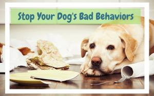 tips to stop dog's naughty behaviors