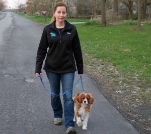 walking puppy with loose leash