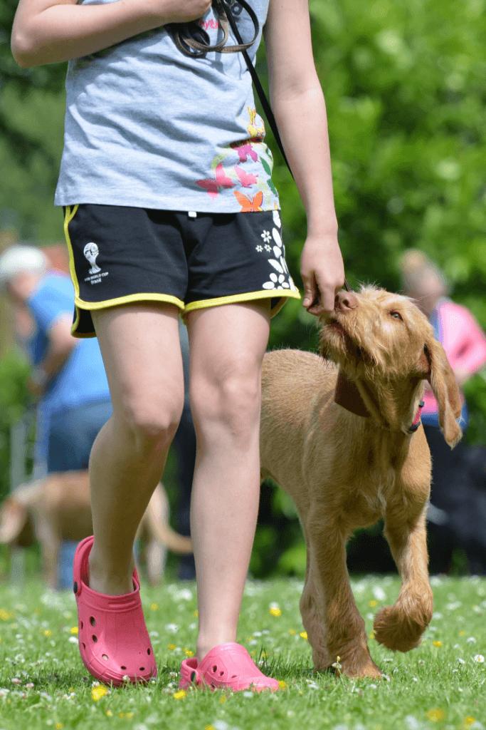 training puppy to heel