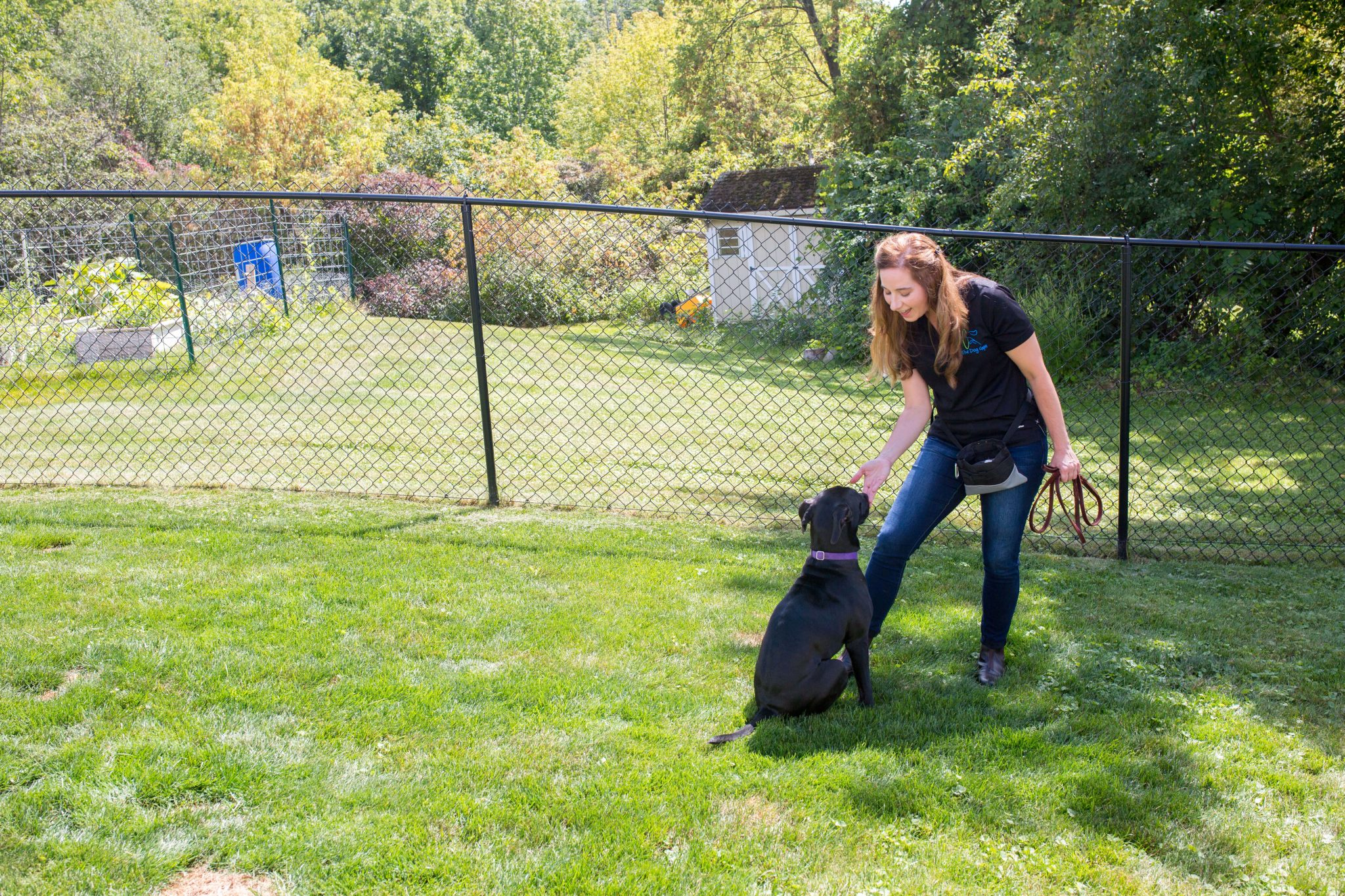 professional dog trainer - michele lennon teaches dog to stay