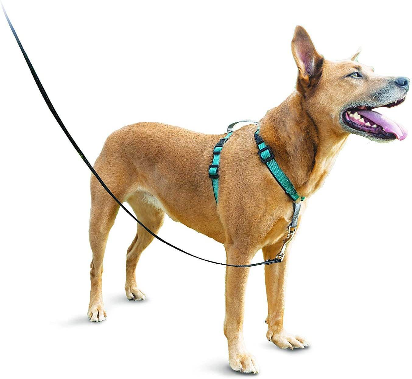 dog harness - front clip with thin straps