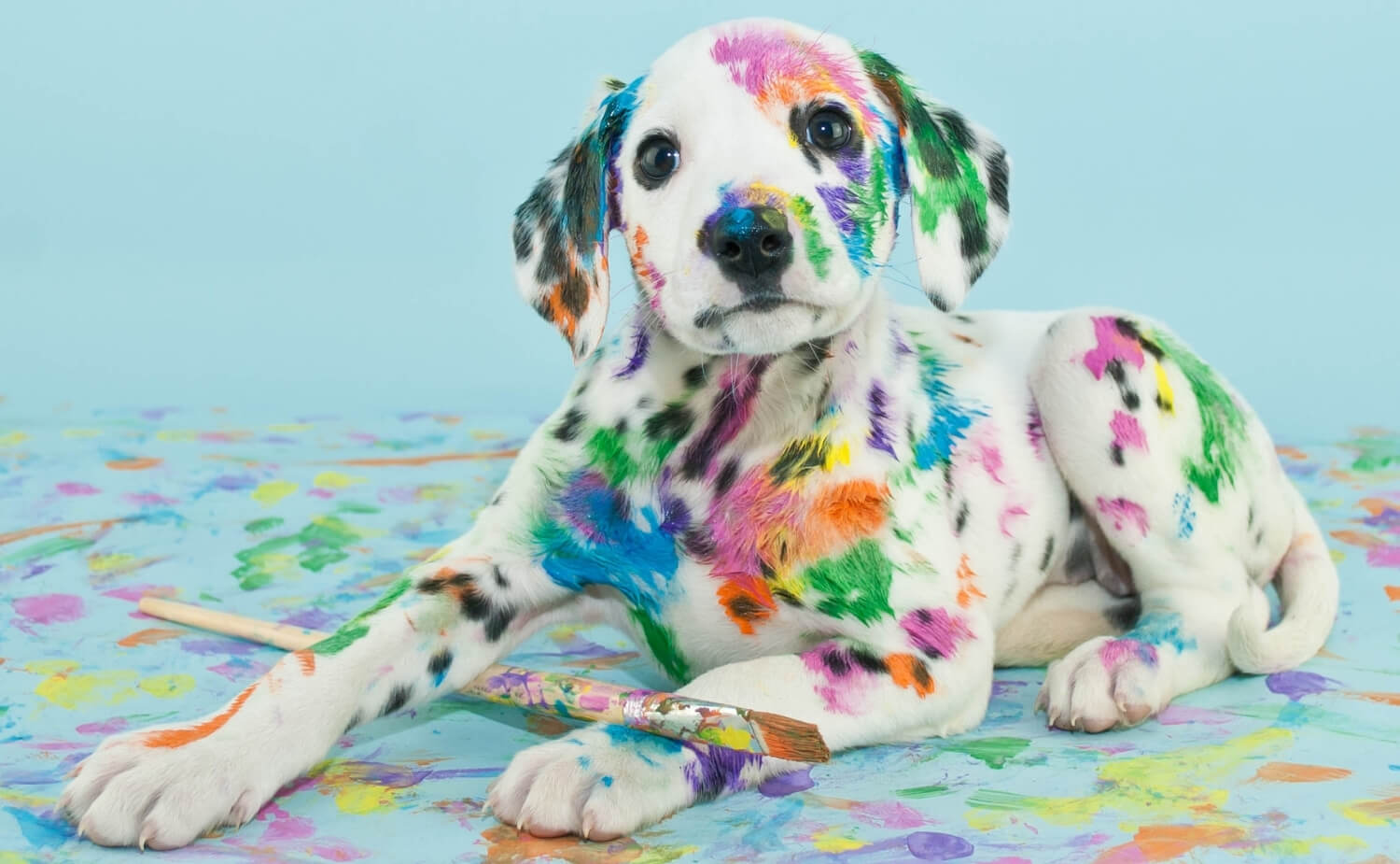 naughty puppy got into paint