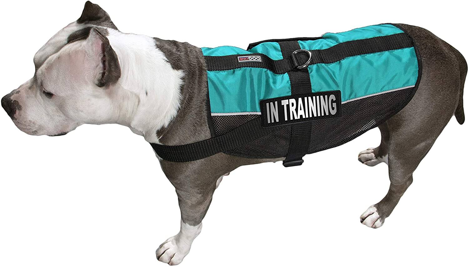 dog training vest with in training label