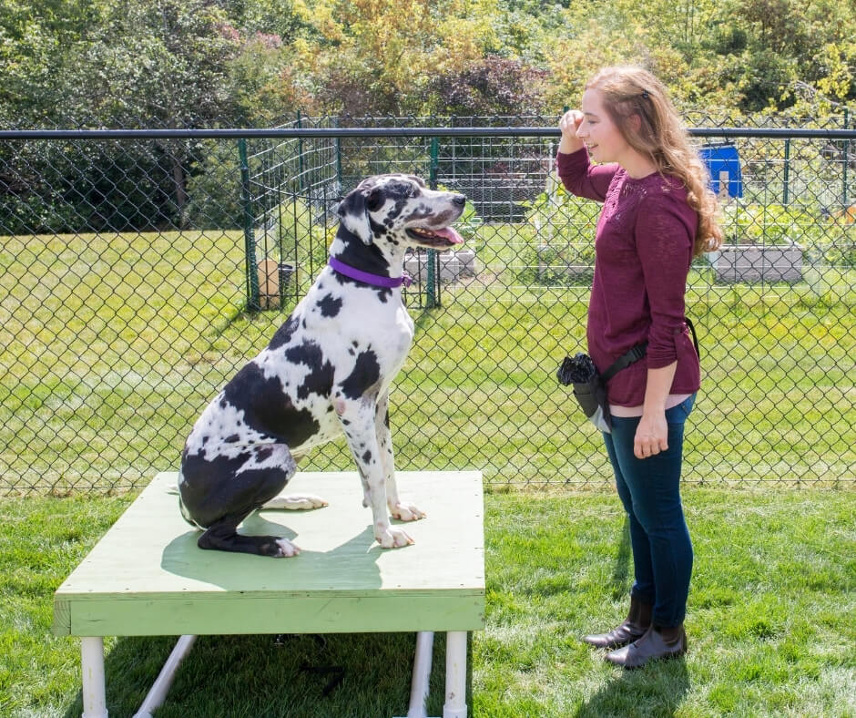 teaching puppy to focus without feeling threatened