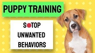 puppy training video - nothing in life is free technique