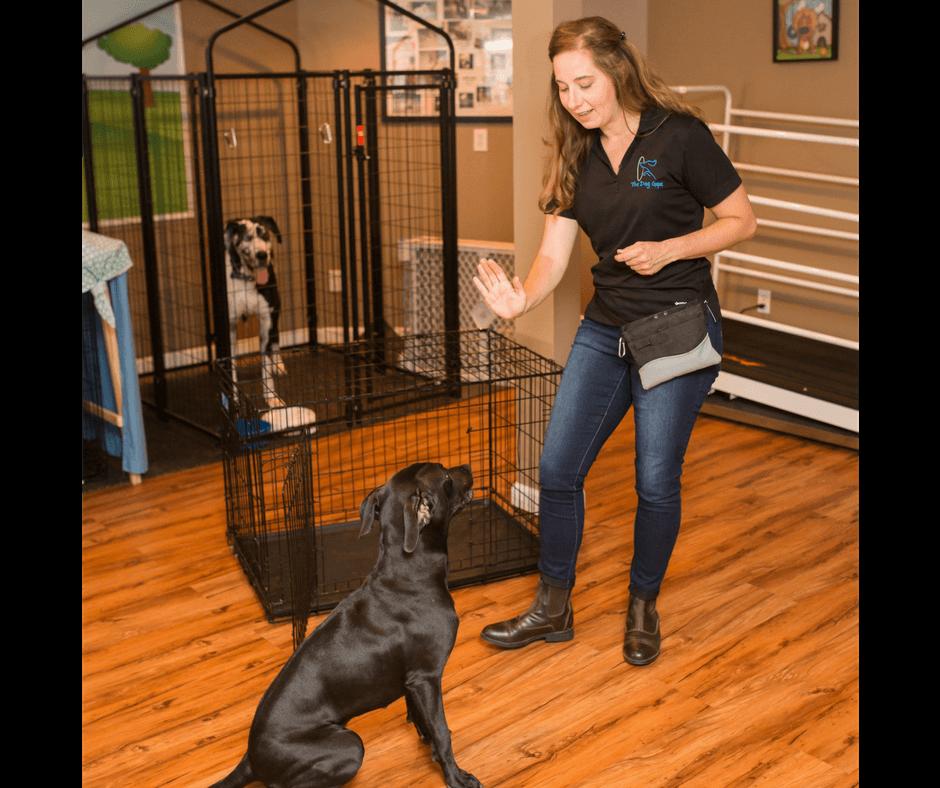 puppy training your dog understands