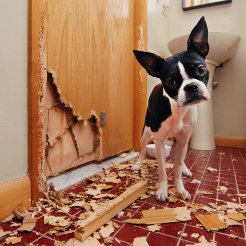 unwanted puppy behaviors like scratching doors