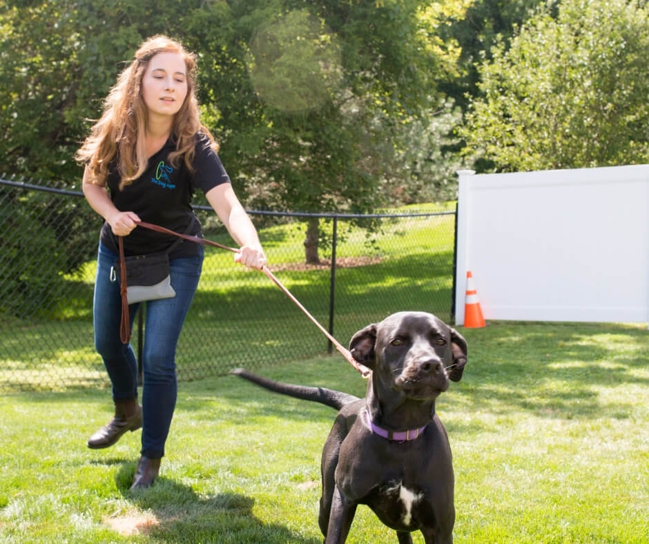 stop unwanted dog behaviors like pulling on the leash